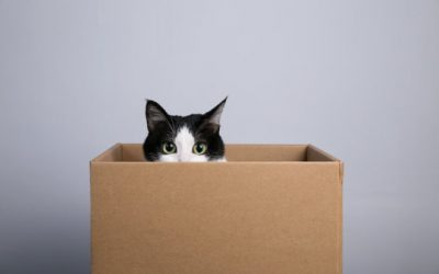Schrödinger's cat with 20 qubits: New record with entangled quantum bits