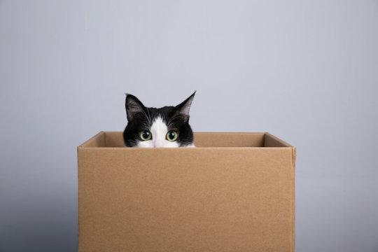 Cat in box (stock image). Credit: © jimmyan8511 / Adobe Stock