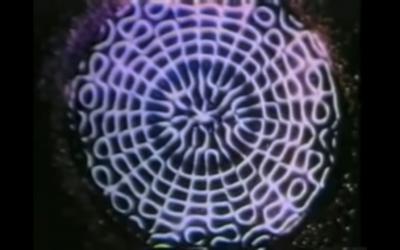 David August – Epikur – Epikur EP (Official Video)