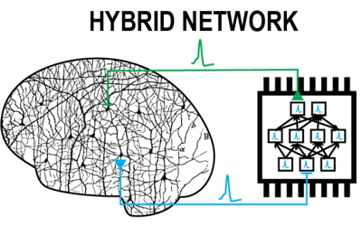 Watch the Internet of Neurons!
